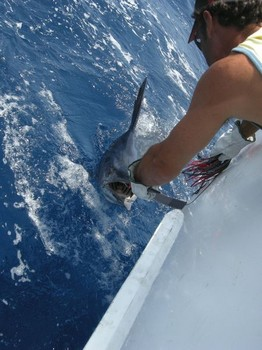 11/07 blue marlin Cavalier & Blue Marlin Sport Fishing Gran Canaria