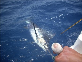 24/07 blue marlin Cavalier & Blue Marlin Sport Fishing Gran Canaria