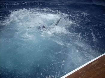 power !!!! Cavalier & Blue Marlin Sport Fishing Gran Canaria