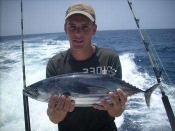04/08 skipjack tuna Cavalier & Blue Marlin Sport Fishing Gran Canaria