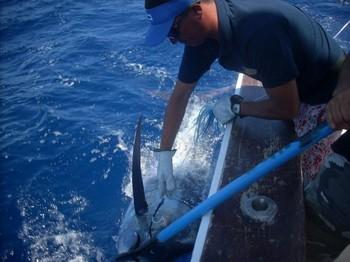 12/08 blue marlin Cavalier & Blue Marlin Sport Fishing Gran Canaria