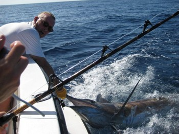 03/09 blue marlin Cavalier & Blue Marlin Sport Fishing Gran Canaria