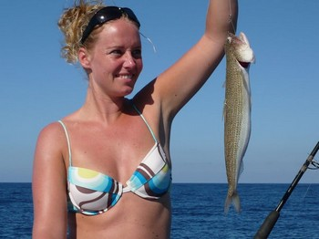 lizard fish Cavalier & Blue Marlin Sport Fishing Gran Canaria