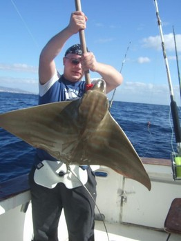 duckbill ray Cavalier & Blue Marlin Sport Fishing Gran Canaria