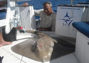 22/01 common stingray Cavalier & Blue Marlin Sport Fishing Gran Canaria