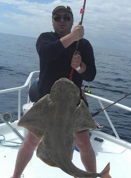 18/04 angelshark Cavalier & Blue Marlin Sport Fishing Gran Canaria