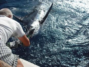 13/05 aguja azul Pesca Deportiva Cavalier & Blue Marlin Gran Canaria