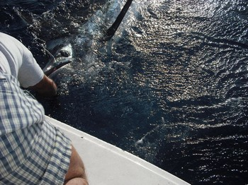 tag and release - 1 Cavalier & Blue Marlin Sport Fishing Gran Canaria