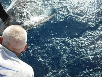 tag and release - 2 Cavalier & Blue Marlin Sport Fishing Gran Canaria