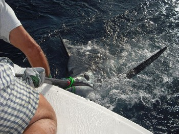 tag and release - 3 Cavalier & Blue Marlin Sport Fishing Gran Canaria