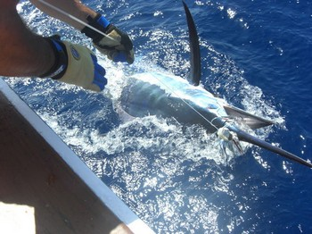 09/06 blue marlin Cavalier & Blue Marlin Sport Fishing Gran Canaria