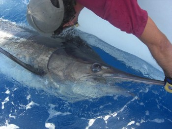 15/06 tag & release Cavalier & Blue Marlin Sport Fishing Gran Canaria