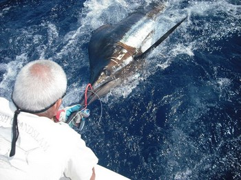 16/06 blue marlin Cavalier & Blue Marlin Sport Fishing Gran Canaria