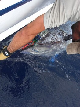 please release me Cavalier & Blue Marlin Sport Fishing Gran Canaria