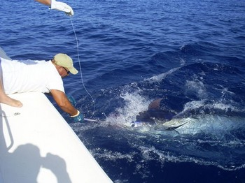 27/06 tag & release Cavalier & Blue Marlin Sport Fishing Gran Canaria