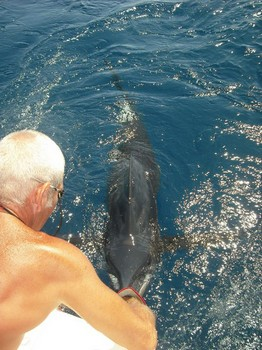 03/07 blue marlin Cavalier & Blue Marlin Sport Fishing Gran Canaria