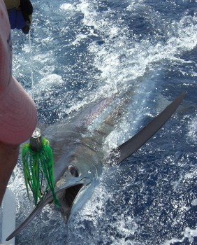 04/07 blue marlin Cavalier & Blue Marlin Sport Fishing Gran Canaria