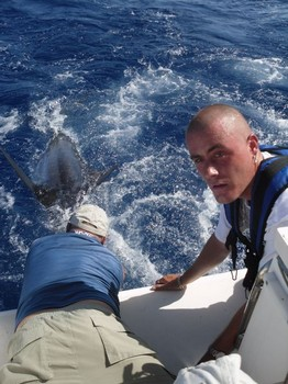 90 kg blue marlin Cavalier & Blue Marlin Sport Fishing Gran Canaria
