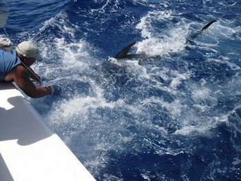 225 kg blue marlin Cavalier & Blue Marlin Sport Fishing Gran Canaria