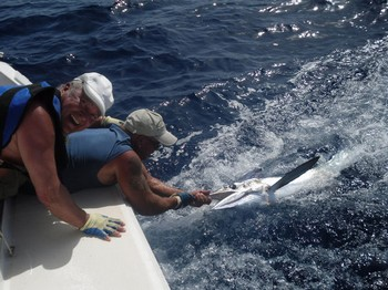 07/07 white marlin Cavalier & Blue Marlin Sport Fishing Gran Canaria