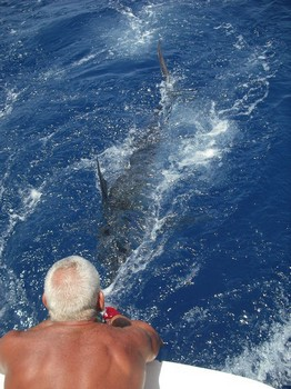 released Cavalier & Blue Marlin Sport Fishing Gran Canaria
