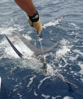release me Cavalier & Blue Marlin Sport Fishing Gran Canaria