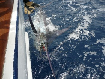 27/07 blue marlin Cavalier & Blue Marlin Sport Fishing Gran Canaria