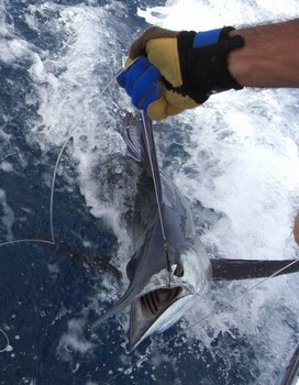 30/07 spearfish Cavalier & Blue Marlin Sport Fishing Gran Canaria