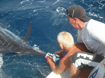 31/07 blue marlin Cavalier & Blue Marlin Sport Fishing Gran Canaria