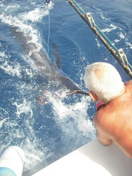 tagged Cavalier & Blue Marlin Sport Fishing Gran Canaria