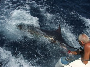 03/08 blue marlin Cavalier & Blue Marlin Sport Fishing Gran Canaria
