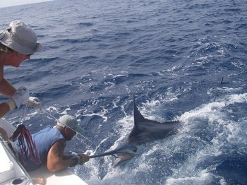 06/08 blue marlin Cavalier & Blue Marlin Sport Fishing Gran Canaria