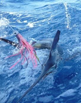 release Cavalier & Blue Marlin Sport Fishing Gran Canaria