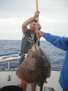 bottle nosed skate Cavalier & Blue Marlin Sport Fishing Gran Canaria
