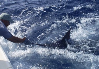 23/09 blue marlin Cavalier & Blue Marlin Sport Fishing Gran Canaria