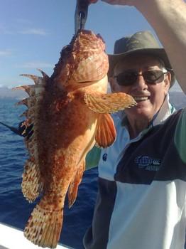 scorpionfish Cavalier & Blue Marlin Sport Fishing Gran Canaria