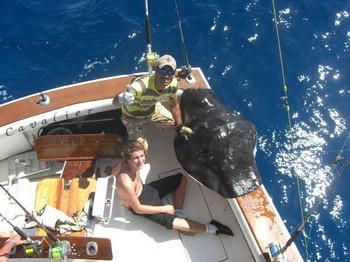 15/10 common stingray Cavalier & Blue Marlin Sport Fishing Gran Canaria