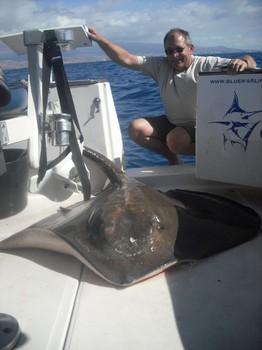 19/10 common stingray Cavalier & Blue Marlin Sport Fishing Gran Canaria
