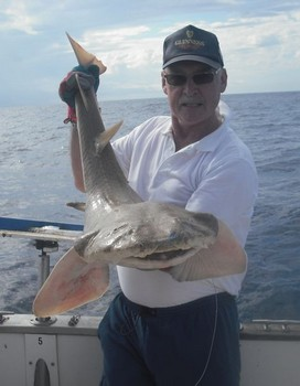 17/11 angel shark Cavalier & Blue Marlin Sport Fishing Gran Canaria