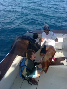 120 Kg Common Stingray Cavalier & Blue Marlin Sport Fishing Gran Canaria