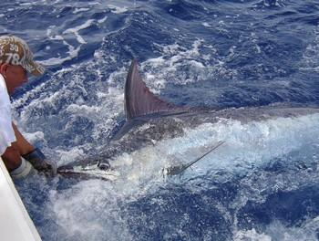 25/05 Blue Marlin Cavalier & Blue Marlin Sport Fishing Gran Canaria
