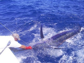 tagged and released Cavalier & Blue Marlin Sport Fishing Gran Canaria