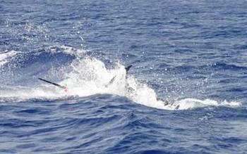 06/06  Blue Marlin Cavalier & Blue Marlin Sport Fishing Gran Canaria