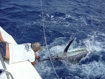 14/06 Blue Marlin Cavalier & Blue Marlin Sport Fishing Gran Canaria