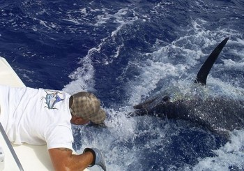 Release Me ? Cavalier & Blue Marlin Sport Fishing Gran Canaria