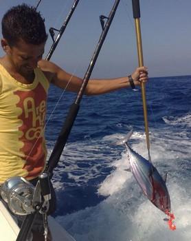BEESIE - 2 Cavalier & Blue Marlin Sport Fishing Gran Canaria