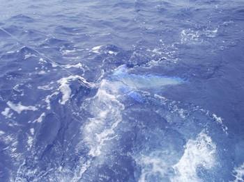05/07 Marlin blanco o Spearfish Pesca Deportiva Cavalier & Blue Marlin Gran Canaria