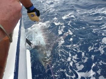 11/07 Marlin azul Pesca Deportiva Cavalier & Blue Marlin Gran Canaria
