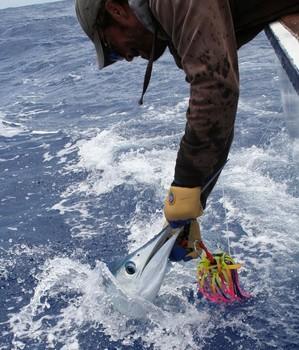 Spear fish Cavalier & Blue Marlin Sport Fishing Gran Canaria
