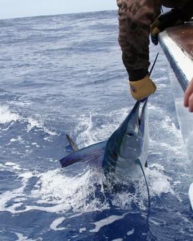 21/07 Pez espada Pesca Deportiva Cavalier & Blue Marlin Gran Canaria